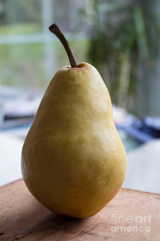 portrait-of-a-pear-arlene-carmel