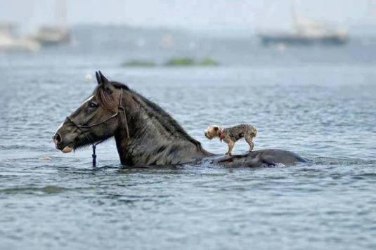 dog-on-horse