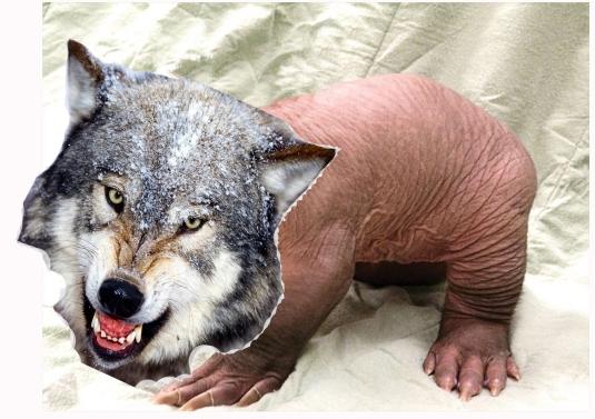 WolfVark