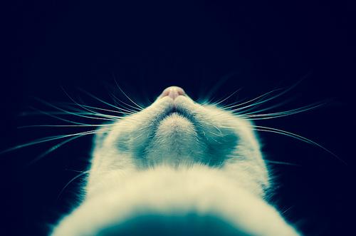 cat self-respect