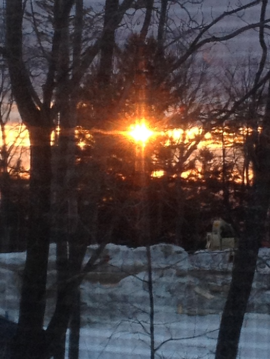 This AM the sun fluttered through the pine branches...