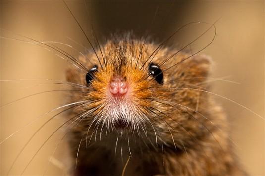 close-upmouse