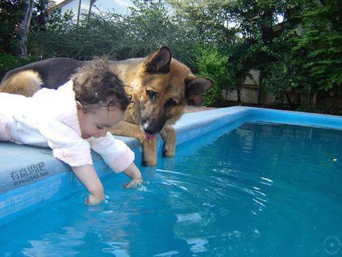 Dog-Dip in Pool