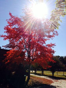 October bursts with color- September, 2014