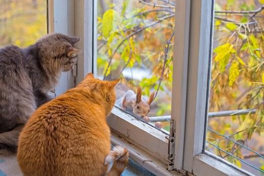 2catsWatchSquirrelEat