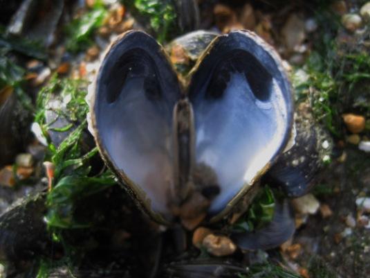 heart-shaped jewel
