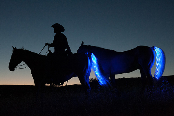Horse Tail Lights