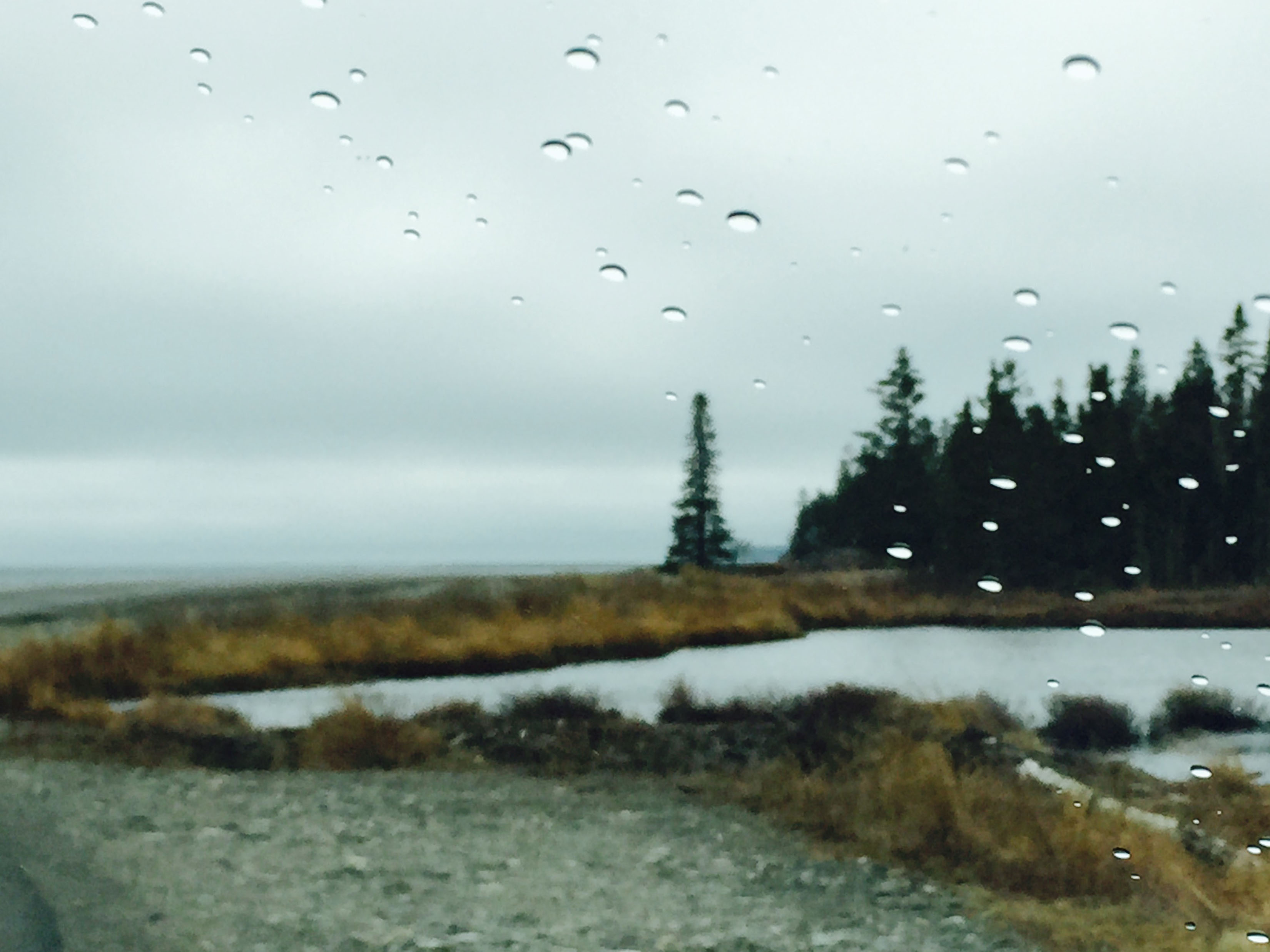 In the rain on the coast Maine in April, 2015