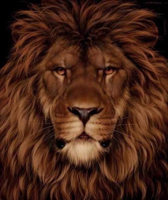 Lion180degrees