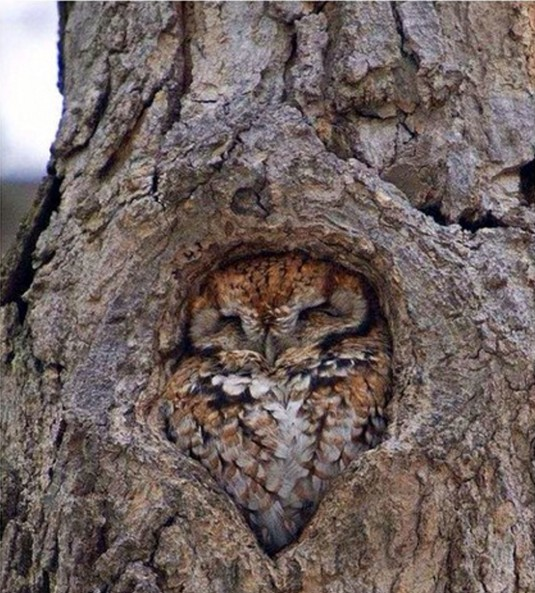 OwlFittingIn