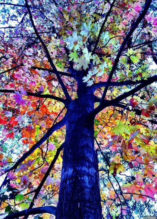 The leaves will turn color