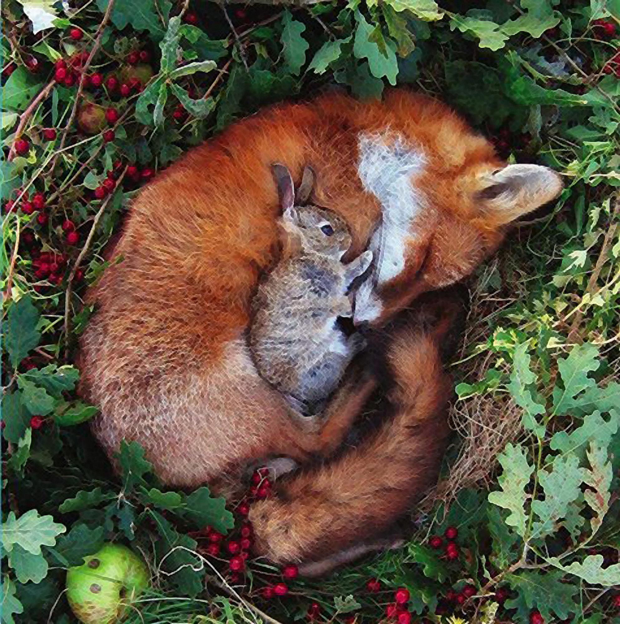 foxandrabbit