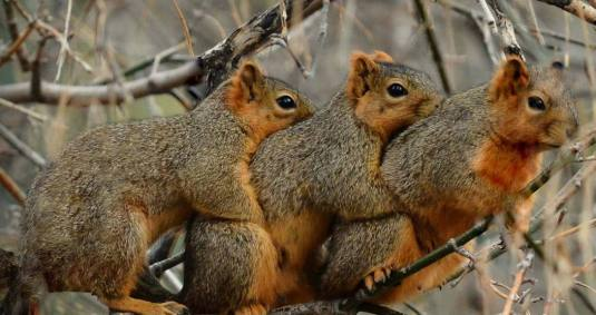 PAY-Three-cute-squirrels-CUDDLING-1170x620