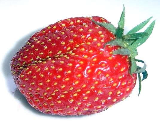 Strawberry_gariguette_DSC03063