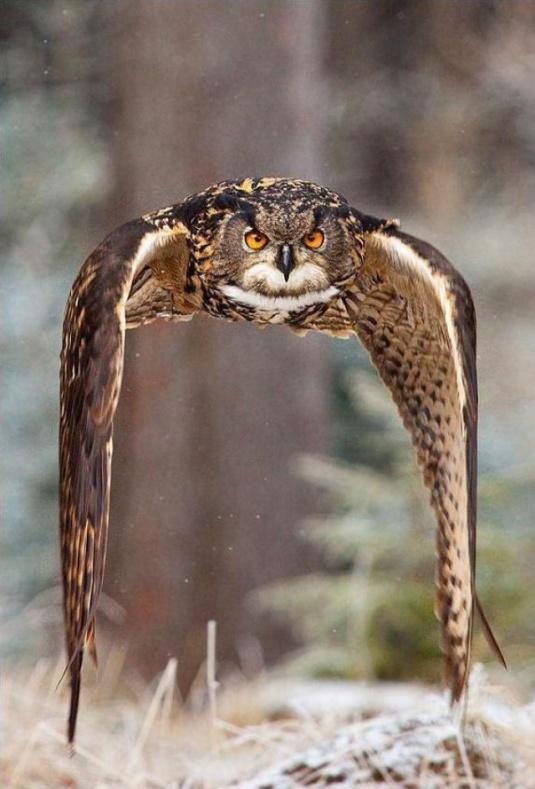 owldefiesgravity
