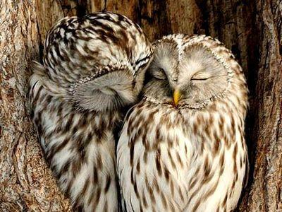 owl 41