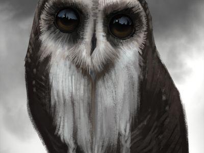 owl 55