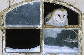 owl 56