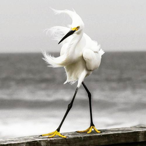Wild-Bird-in-extreme-wind